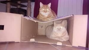 mi è entrato un gatto in casa archivio the games machine