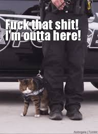 Fuck That Shit Meme - cat im out gif find download on gifer 367x500 px