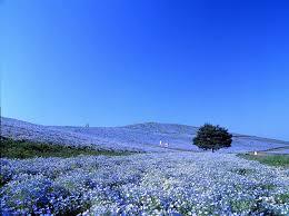 photos japan u0027s 34 most beautiful places cnn travel
