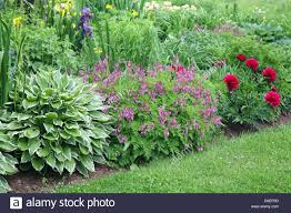 backyard perennial garden containing late summer flowering stock