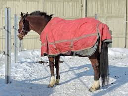 Outdoor Rugs For Horses Blanket