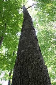 tri state timber award winning timber company