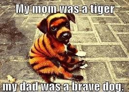 Tiger Mom Memes - his mom was a tiger his dad was a brave dog funny pet humor