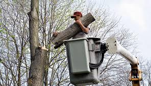 discount tree service miami fl 305 229 9606