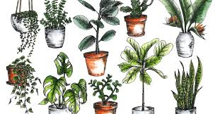 10 houseplants that don u0027t need sunlight the creative route