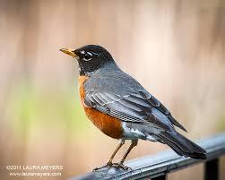 New york city birding laura meyers photography