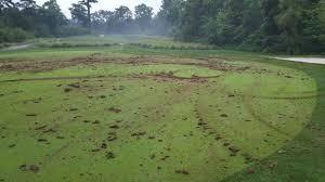 Backyard Golf Course by Mark Wahlberg U0027s Backyard Golf Practice Area Is Incredible I Love