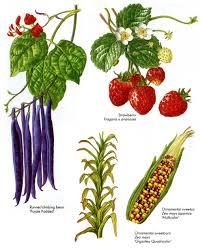 ornamental crops hart davies
