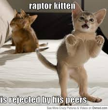 raptor kitten cat meme cat planet cat planet