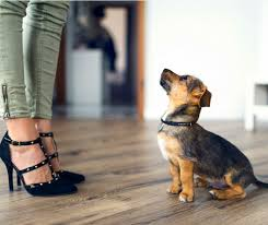 how to protect hardwood floors from dogs svb wood floors