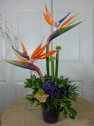simply birds of paradise in santa ca jp designs floral