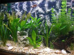 50 best aquarium backgrounds to download u0026 print free u0026 premium