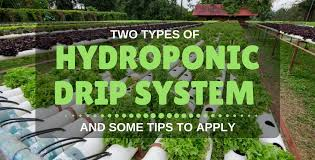 Types Of Community Gardens - 2 types of hydroponic drip system and some tips to apply