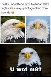 America Eagle Meme - 25 best memes about american bald eagle american bald eagle memes
