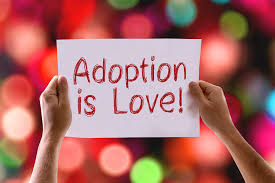 american humane s adopt a cat month reminds us to adopt a cat or