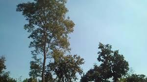 jharkhand tourism blue sky green mountain lake view at topchanchi