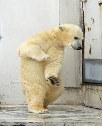 Dancing Bear Meme - lovely 21 dancing bear meme wallpaper site wallpaper site