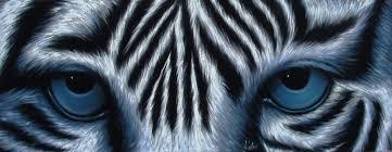 tiger white tiger original painting on black velvet