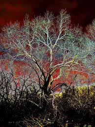 electric tree photograph by steve doris
