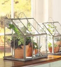 try a tabletop greenhouse the little dog blog