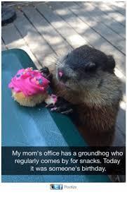 Groundhog Meme - 25 best memes about groundhogs groundhogs memes
