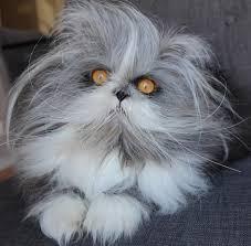 Cat Instagram Internet Goes Bonkers Over Werewolf Like U0027atchoum U0027 Inquirer