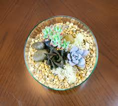 Miniature Indoor Plants by Angled Glass Bowl Terrarium Kit With Miniature Succulent Plants