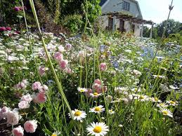 Cottages Gardens - wallpapers tagged with blooms plants gardens valley flowers