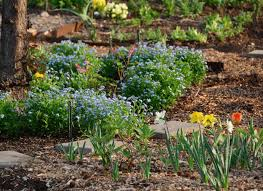 drought tolerant plant ideas for your homestead