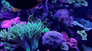 sb reef lights review sb reef lights 560g display tank youtube