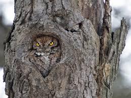 owl in tree album on imgur