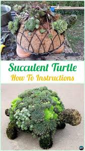 Succulent Gardens Ideas 41 Best Delicious Succulents Images On Pinterest Succulents