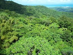 canopy amazon floor life from above awesome rainforest floor life in the
