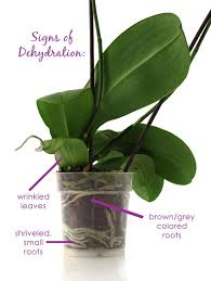 orchids care cube orchid not blooming cube orchids signs of