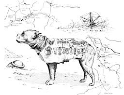 ctmd stubby the military dog