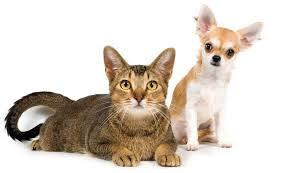 desktop cats images download