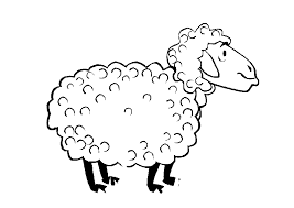 sheep colouring pages kids