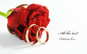 all red rings images Wedding rings red rose flower celebrate love hd widescreen jpg