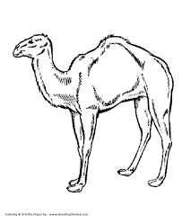 wild animal coloring pages arabian camel coloring page and kids