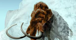 woolly mammoth siberia cloned report ny daily