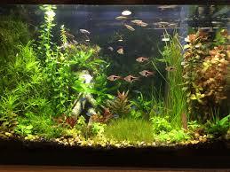 10 gallon planted tank led lighting planted aquarium led aquarium article digest
