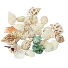 where to buy seashells new approx 100g mixed seashells mix sea colorful collectible