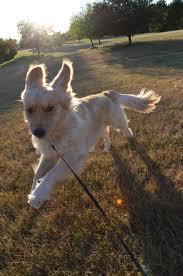rates professional dog walking and pet sitting in northville mi