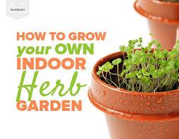 herb garden indoor how to grow your own indoor herb garden in a small space