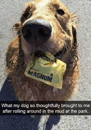 T Dog Memes - a bunch of adorable dog memes to brighten your day neatorama