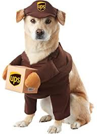 Doge Halloween Costume Amazon California Costume Collections Holy Hound Dog Costume