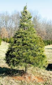 the last noel bakers creek tree farm marks its final christmas