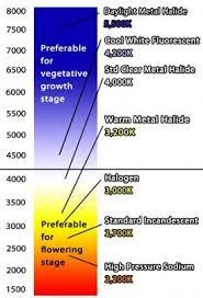 best light for weed seedlings types of bulbs in indoor for growing marijuana plants