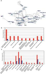 comprehensive network analysis of anther expressed genes in rice