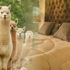 Alpaca Duvets Bedding I Bed Linen I Down Duvets I Pillows I Mattresses I Sanders